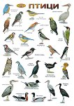 Птици -