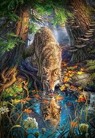 Див вълк -