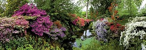 "Ботаническа градина  - панорама - Колекция ""Александър Фон Хумболт"" (Alexander von Humboldt) -"