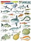 Защитени и редки риби на Балканите - стенно учебно табло - 53 x 78 cm -