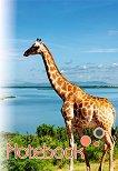 Ученическа тетрадка - Жираф - Формат A5 - тетрадка