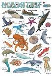 Морски свят -