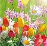 Салфетки за декупаж - Пролетни цветя - Пакет от 20 броя
