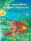 Как порастват малките таралежи - Фридерун Райхенщетер - книга