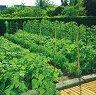 Мрежа за поддържане на зеленчуци - Trellinet -