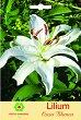 Луковица от Лилиум - Casa Blanca - Опаковка от 1 брой -