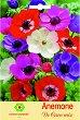 Луковици от Анемоне - микс от цветове - Опаковка от 5 броя