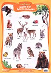 Златно ключе: Учебно табло - Светът на дивите животни за 1., 2., 3., 4. подготвителна група -