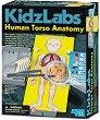 """Анатомия на човешкото тяло - Детски образователен комплект от серията """"Kidz Labs"""" -"""