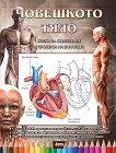 Човешкото тяло - книга за оцветяване и проверка на знанията -
