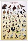 Учебно табло: Птиците в България -