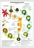 Учебно табло: Покритосеменни растения -