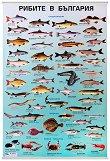 Учебно табло: Рибите в България -