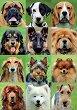 Кучета - Колаж -