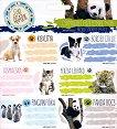 Етикети за тетрадки - Cute Animals - Комплект от 18 броя - книга