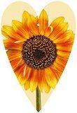 Поздравителна картичка - Слънчоглед - картичка