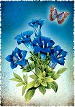 Поздравителна картичка - Цветя -