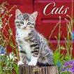 Стенен календар - Cats 2021 -