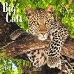 Стенен календар - Big Cats 2021 - продукт