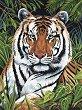 Рисуване по номера с акрилни бои - Тигър