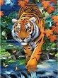 Рисуване по номера с акрилни бои - Тигър - Комплект за картина с размери 22 x 30 cm -