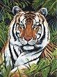 Рисуване по номера с акрилни бои - Тигър - Комплект за картина с размери 23 x 30 cm -