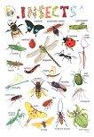 Insects - стенно учебно табло на английски език - 52 x 77 cm -