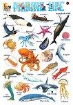 Marine Life - стенно учебно табло на английски език - 52 x 77 cm -
