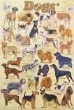 Dogs - стенно учебно табло на английски език -