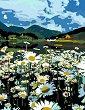 Рисуване по номера с акрилни бои - Поле от лайка - Комплект за картина с размери 35 x 45 cm -
