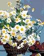 Рисуване по номера с акрилни бои - Маргаритки в кошница - Комплект за картина с размери 35 x 45 cm -