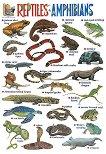 Reptiles and Amphibians - стенно учебно табло на английски език - 52 x 77 cm -
