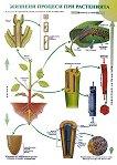 """Двустранно учебно  табло :  """"Жизнени процеси при растенията"""" и """"Кръвоносна система"""" -"""