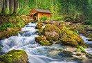 Воденица в гората -