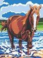 Рисуване по номера - Пони - Комплект за картина с размери 22.5 x 30.5 cm -
