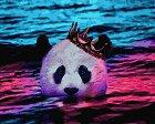 Рисуване по номера с акрилни бои - Панда - Комплект за картина с размери 50 x 40 cm -