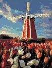 Рисуване по номера с акрилни бои - Вятърна мелница - Комплект за картина с размери 35 x 45 cm -