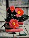 Рисуване по номера с акрилни бои - Хармония - Комплект за картина с размери 35 x 45 cm -