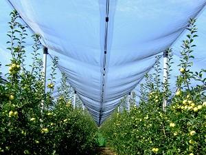 Плетена мрежа против градушка -