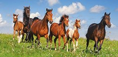 Стадо коне - пъзел