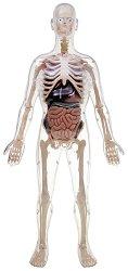 Сглобяем анатомичен модел на човек -