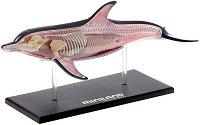 Сглобяем анатомичен модел на делфин -