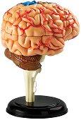 Сглобяем анатомичен модел на човешкия мозък -