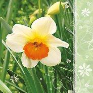 Салфетки - Нарцис - Пакет от 20 броя