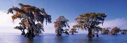 "Голи кипариси - панорама - Колекция ""Александър Фон Хумболт"" (Alexander von Humboldt) - пъзел"