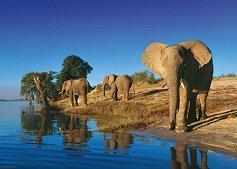 "Жадни слонове - Колекция ""Александър Фон Хумболт"" (Alexander von Humboldt) - пъзел"