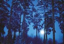 """Пълнолуние - Колекция """"Magic Forest"""" - пъзел"""