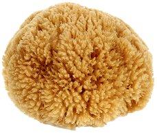 """Естествена карибска коралова гъба за баня - От серията """"Natural"""" - лосион"""