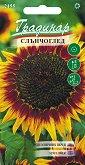 """Семена от Слънчоглед Флоренция - Опаковка от 5 g от серия """"Градинар: Цветя"""""""