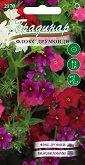 """Семена от Флокс Друмонди - микс от цветове - Опаковка от 0.25 g от серия """"Градинар: Цветя"""""""